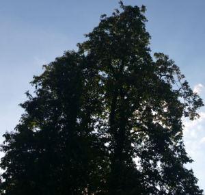 2015-05-16 Baum